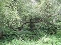Damp woodland - geograph.org.uk - 844793.jpg