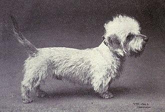Dandie Dinmont Terrier - Dandie Dinmont Terrier circa 1915