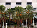 DatePalms2009.JPG