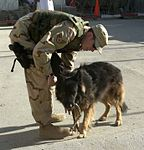 Dax, on patrol in Kabul -b.jpg