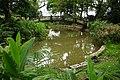 Daxi Park 大溪公園 - panoramio.jpg
