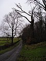 Dead Tree - geograph.org.uk - 88851.jpg