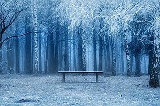Košutnjak - Winter in Košutnjak