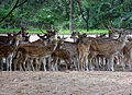 Deer Park at Karimnagar.JPG