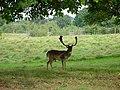 Deer in the Park - geograph.org.uk - 564464.jpg