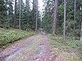 Degučių sen., Lithuania - panoramio (205).jpg