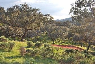 Dehesa San Francisco Sierra de Aracena y Picos de Aroche.jpg