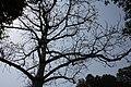 Delhi Zoo Cotton Silk Tree.jpg