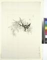 Deux hirondelles, branche d'arbre (NYPL b14506646-1149406).tiff