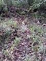 Dictamnus albus - panoramio.jpg