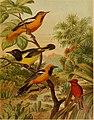 Die Nordamerikanische Vogelwelt (1891) (14750792002).jpg