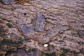 Dinosaur footprint on Staffin beach - geograph.org.uk - 744987.jpg
