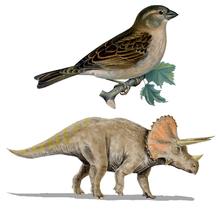 Överordningen Dinosauria defineres som knuden mellem fuglene, Diplodocus og Triceratops.