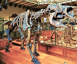 [Image: 250px-Diprotodon_australis_skeleton_1.JPG]