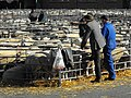 Discussing the sheep - geograph.org.uk - 1587471.jpg
