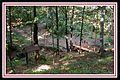 Dolina różaneczników - panoramio.jpg
