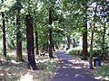 Downham Woodland Walk, London Borough of Lewisham, BR1 (2647716844).jpg