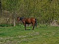 Dsc00483 Horse (225908885).jpeg