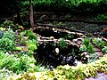 Duckponds in garden - geograph.org.uk - 484963.jpg