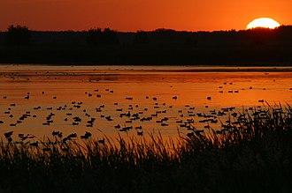 Agassiz Wilderness - Image: Ducks at sunrise, Agassiz National Wildlife, MN (6449996553)