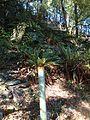 Dun Mountain Trail 11.JPG