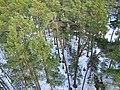 Dzintari - panoramio (27).jpg