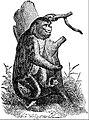 EB1911 Primates - Orange Snub-nosed Monkey.jpg