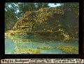 ETH-BIB-Budapest, Margareteh-Insel, Schwefelquellen-Teich-Dia 247-11744.tif