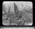 ETH-BIB-Gwandelenfluh-Bergsturz, Waldwirrwar-Dia 247-00940.tif