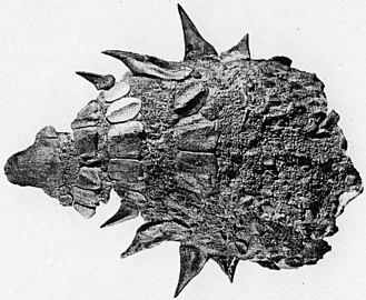 Ankylosauria - Armour of Edmontonia