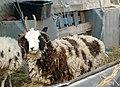 Eitam-Farm-MVIF-309.jpg