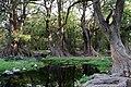 El Sabinal, Aguascalientes (20906476040).jpg