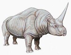 230px-Elasmotherium_cauc1DB dans LCR - NPA