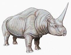 Шерстистый носорог — Википедия