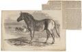 Equus quagga - 1700-1880 - Print - Iconographia Zoologica - Special Collections University of Amsterdam - UBA01 IZ21700025.tif