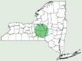Erigeron strigosus var septentrionalis NY-dist-map.png