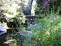 Estero en el Valle de las Catas 2.jpg