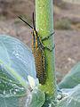 Ethiopie-Insecte (2).jpg