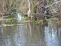 Everglades verkl.jpg