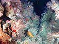 Expl0017 - Flickr - NOAA Photo Library.jpg