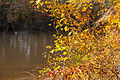 Fall at the Chattahoochee River.jpg