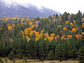 Fall colors 2009 (5014450109).jpg