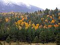 Fall colors 2009 (5014450109).jpg