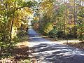 Fall in Kings Ridge Estates in Woodstock GA.jpg