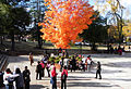 Fall on the campus of Tuskegee.JPG
