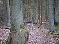 Fallow Deer in the Spandauer Forst in winter 1.jpg