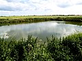 Farmland Pond - geograph.org.uk - 876790.jpg