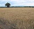 Farmland near The Valley Farm - geograph.org.uk - 920799.jpg