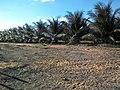 Fazenda Santa Rita - Várzea Redonda PE - panoramio (2).jpg