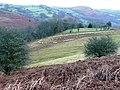 Feeding time - geograph.org.uk - 669809.jpg